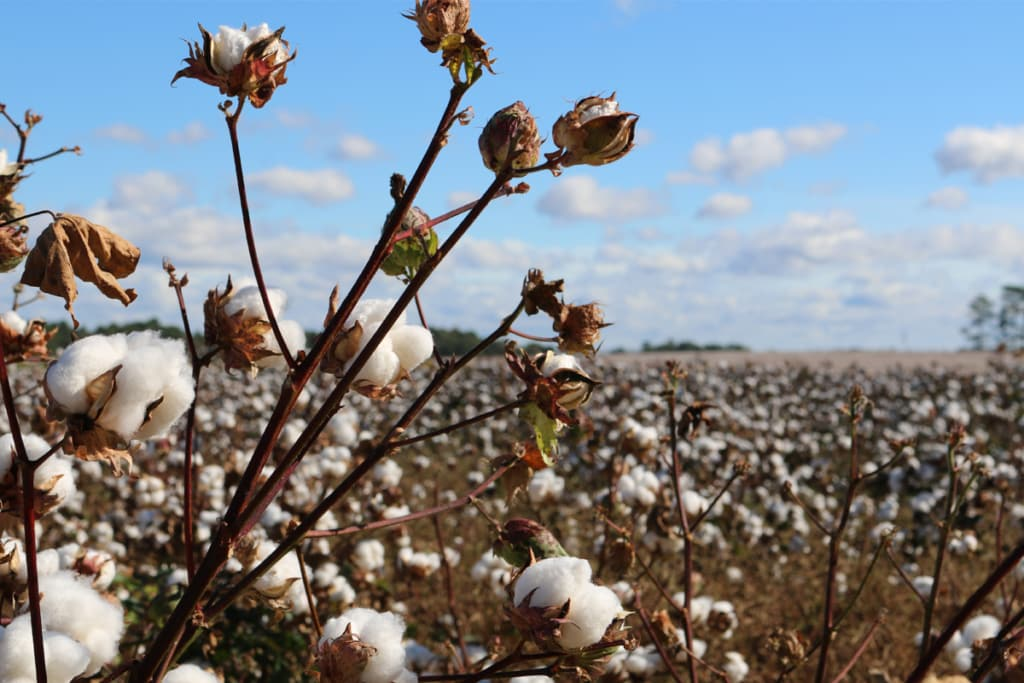 Is it better to choose organic cotton? 5